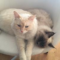 I 2 adorabili assistenti di Emma :-)